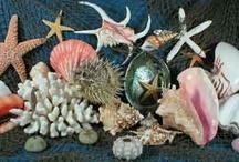 Seashells / by Dawn Riley