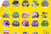 Blomster å andre ting du planta i hagen