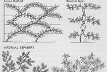 Espaliered fruit trees