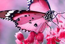 Favorit fjäril 1
