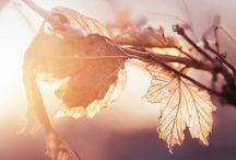 """Passion """"automne en pastel"""""""