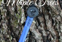 Maple syrup / Tree sapper's delight.