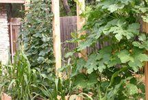 сад огород дизайн