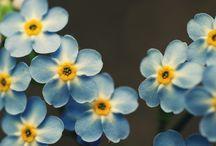 Flowers, beauty!