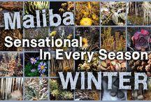 Maliba Winter / Maliba, Sensational in every season......