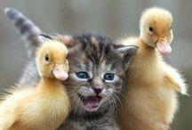 OMG!!! So cute !!!!