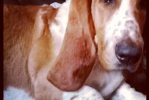 Bassethounds / by Mindy Tryon