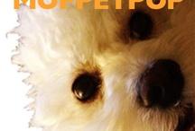 MUPPETPUP.COM