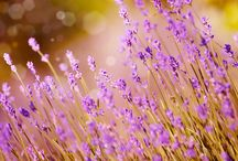 Aromatherapy Safety / Safety using essential oils