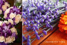 Fiolet, kolor przewodni wesela | Violet