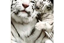 Katter  / Fina katter!