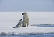 Recipe for Disaster / Some of our favorite images from America's Arctic, which is slated for oil drilling this summer.