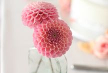 2014 Trend: Dahlias / Wedding Wire is predicting that the dahlia will me the hot flower of 2014. They come in a wide variety of colors and create a lush, unique look. The dahlia is one of Jillian's personal favorites.