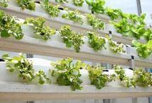 hydroponic gardening / by randy eason