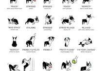 !Dogs and more / Boxer Training dogs TTouch tips pet care