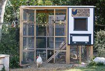 greenhouses/coop