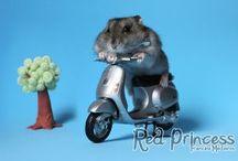 Meus hamsters
