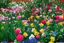 Kvetinky  / kvietky
