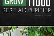 De plante