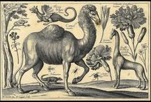 Bestiary / Animal art & Illustration
