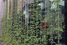 garden privacy