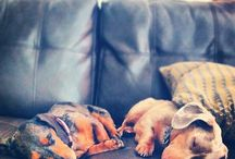 Love my Doxies