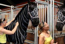 Fayebrook farms / Horses