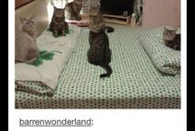 cat-astrophies