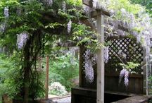 Beautiful Arbors / by Sabrina and Todd Farber