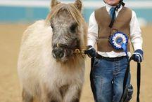 Hästar & djur