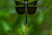 ważki i inne owady
