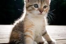 kleine dieren-little animal