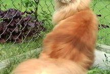 Kočky / Kočky,kocouři,Garfield