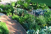 Jardin / Idées pour le jardin de la maison
