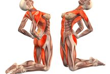 Musculus (kas)