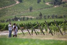 Valle de Colchagua / El valle de Colchagua es uno de los destinos más reconocido a nivel internacional de la Región del Libertador, gracias a la calidad de sus vinos, sus hermosos paisajes y la oferta de servicios turísticos que ofrece durante todo el año.