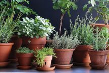 Boxed Herbs