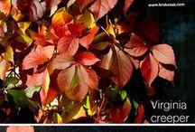 őszi kreatív