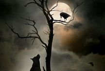 There lives a wolf