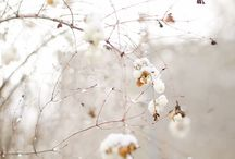 Winter time  / by Dolores Gnilšek