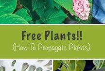 Regrow Plants