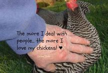 Poultry Classics - Captioned Photos / Captioned photos of chickens, turkeys, quinea fowl, geese, ducks, and poultry related...