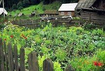 záhrada-clematis