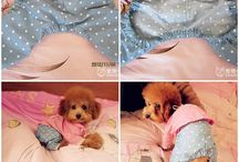 Cute stuff for dogs