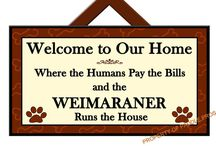 A house is not a home with out a weimaraner