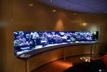 Reef Tank Ideas