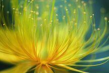 flower power / by Marzena Krzewicka