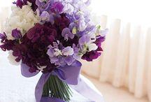 Purple File / カリフォルニアプルーンと同じ、美しいパープル色のイメージを集めています