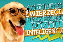 test iq online | test na inteligencje | test na iq
