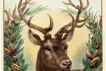 deer / One of the most Beautiful animals